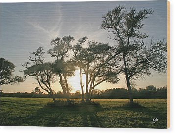 Wood Print featuring the photograph This One Is For You by Phil Mancuso
