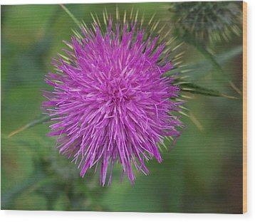 Wood Print featuring the photograph Thistle by Angi Parks