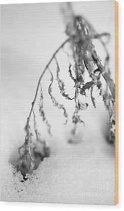 Thistle In Snow Wood Print by Gabriela Insuratelu