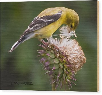 Wood Print featuring the photograph Thistle Seed Gathering by Don Durfee