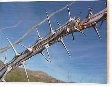 Wood Print featuring the photograph Thorns Along The Apache Trail by Joel Deutsch