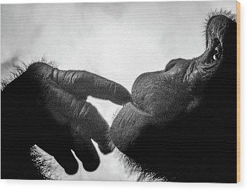 Thoughtful Chimpanzee Wood Print by Marius Sipa