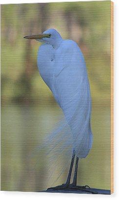 Thoughtful Heron Wood Print by Kim Henderson