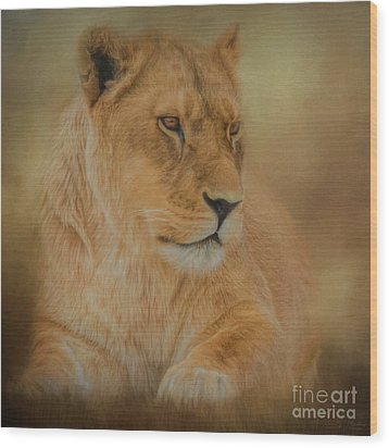 Thoughtful Lioness - Square Wood Print