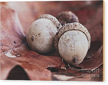 Wood Print featuring the photograph Three Acorns And Autumn Oak Leaves by Stephanie Frey