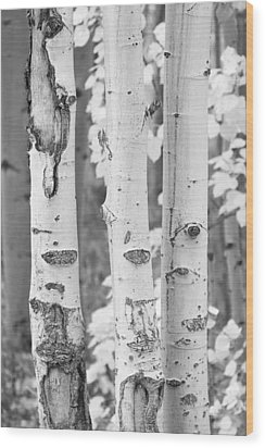 Three Aspens In Black And White  Wood Print by James BO  Insogna