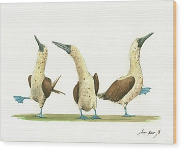 Three Blue Footed Boobies Wood Print