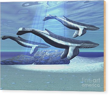 Three Blue Whales Move Wood Print by Corey Ford