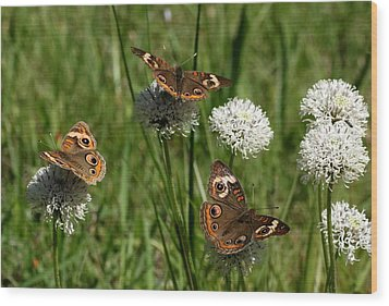 Three Buckeye Butterflies On Wildflowers Wood Print by Sheila Brown