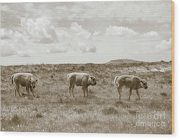 Wood Print featuring the photograph Three Buffalo Calves by Rebecca Margraf