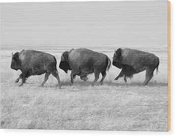 Three Buffalo In Black And White Wood Print by Todd Klassy