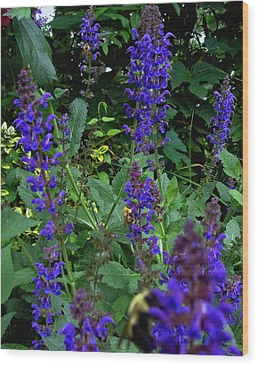 Three Bumble Bees And Dephiniums Wood Print by Martin Morehead