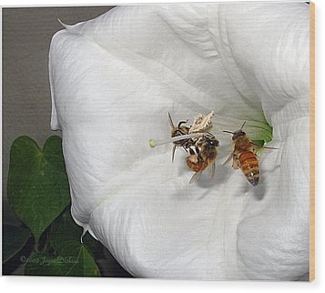 Wood Print featuring the photograph Three Busy Bees by Joyce Dickens