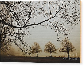 Wood Print featuring the photograph Three Cypress In The Mist by Iris Greenwell