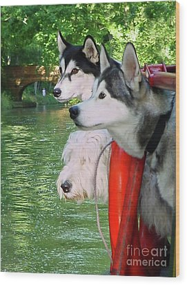 Three Dogs On A Boat Wood Print by Terri Waters