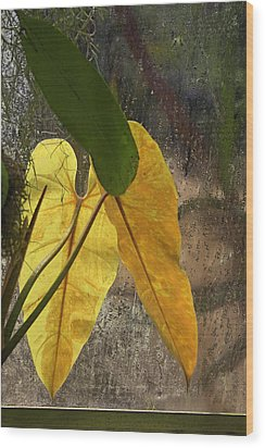 Wood Print featuring the photograph Three Exotic Leaves by Viktor Savchenko