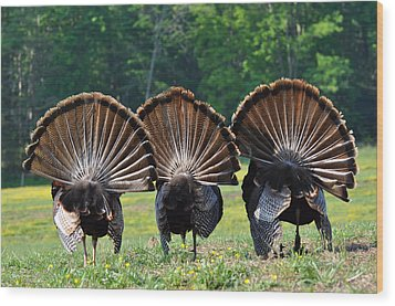 Three Fans Wood Print by Todd Hostetter