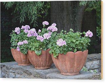 Three Flower Pots Wood Print by Deborah  Crew-Johnson