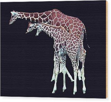 Wood Print featuring the photograph Three Giraffes by Merton Allen