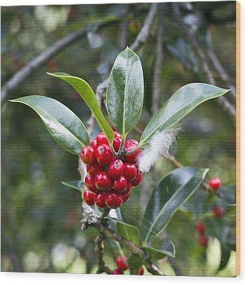 Three Happy Leaves Among Red Berries Wood Print by Helga Novelli