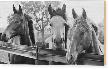 Three Horses Wood Print by Brian Foxx