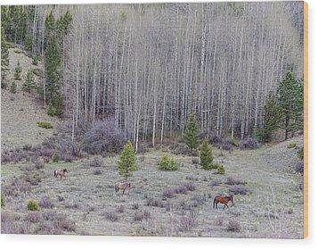 Three Horses Wood Print by James BO Insogna