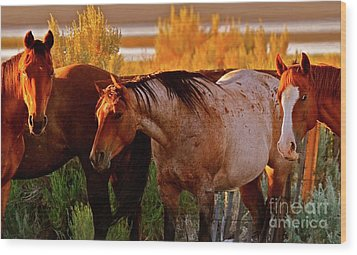 Three Horses Of A Suspicious Corral Wood Print by Gus McCrea