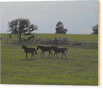 Three Horses Wood Print by Rebecca Cearley