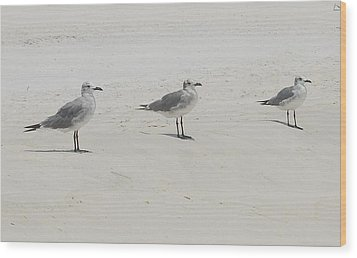 Three In A Row Wood Print by Beverly Hammond