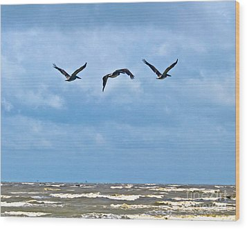 Wood Print featuring the photograph Three In Flight by Ken Frischkorn