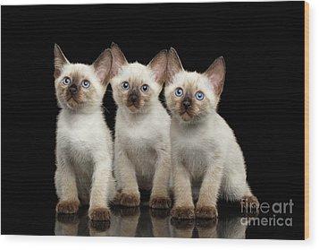 Three Kitty Of Breed Mekong Bobtail On Black Background Wood Print