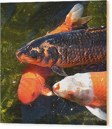Three Koi Waiting Wood Print