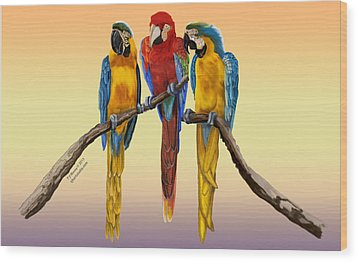 Three Macaws Hanging Out Wood Print