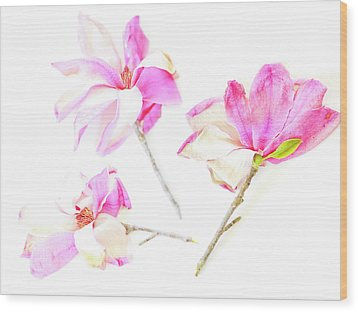 Wood Print featuring the photograph Three Magnolia Flowers by Linde Townsend