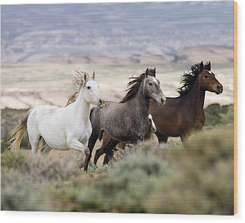 Three Mares Running Wood Print by Carol Walker