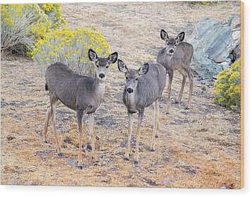 Wood Print featuring the photograph Three Mule Deer In High Desert by Frank Wilson
