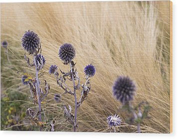 Three Purple Echinops Wood Print by Helga Novelli