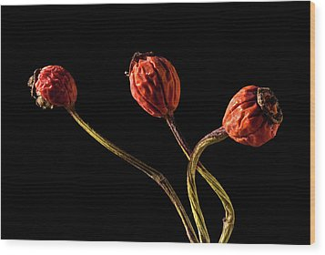 Three Rose Hips Wood Print