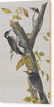 Three Toed Woodpecker Wood Print by John James Audubon