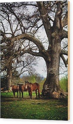 Three Under A Tree Wood Print by Greg Mimbs