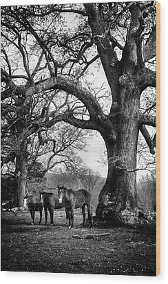 Three Under A Tree In Black And White Wood Print by Greg Mimbs