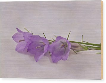 Three Wild Campanella Blossoms - Macro Wood Print by Sandra Foster