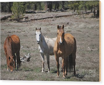 Wood Print featuring the photograph Three Wild Horses by Donna Greene