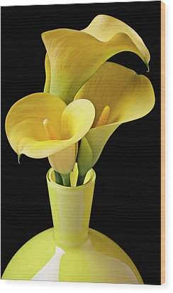 Three Yellow Calla Lilies Wood Print by Garry Gay