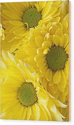 Three Yellow Daisies  Wood Print by Garry Gay