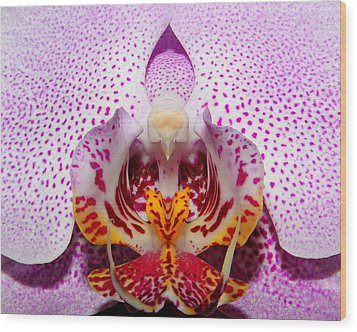 Wood Print featuring the photograph Throat Of An Orchid by Judy Vincent