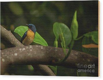 Tickell's Blue Flycatcher Wood Print by Venura Herath