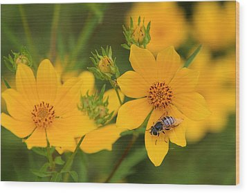 Tickseed Sunflower Wood Print