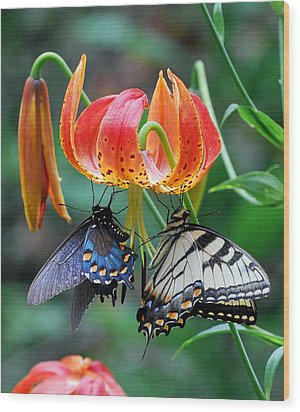Tiger And Black Swallowtails On Turk's Cap Lilly Wood Print