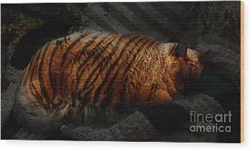 Tiger Dreams Wood Print by Kathi Shotwell